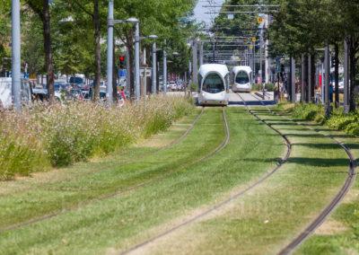 chazal-entretien-des-espaces-verts-du-tramway-t4-Lyon-Frederic-Chillet-3