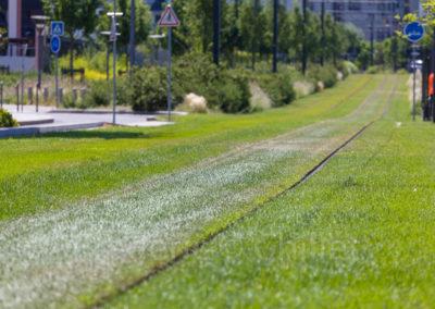 chazal-entretien-des-espaces-verts-du-tramway-t4-Lyon-Frederic-Chillet-4