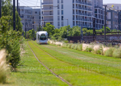 chazal-entretien-des-espaces-verts-du-tramway-t4-Lyon-Frederic-Chillet-5